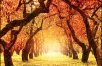 Confessioni Intime – Autunno: Uno testa Uno